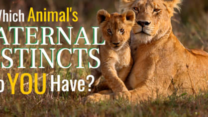 We all know a Mama Bear, but what about a Mama Lioness or Elephant Matriarch?