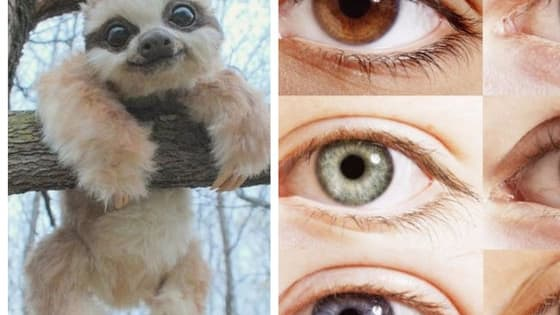 Eyes are the window to your soul, so whose eyes are more important than your soulmate's? Tell us which of these cuddly animals are your favorites, and we'll reveal the color of your soulmate's dreamy eyes.