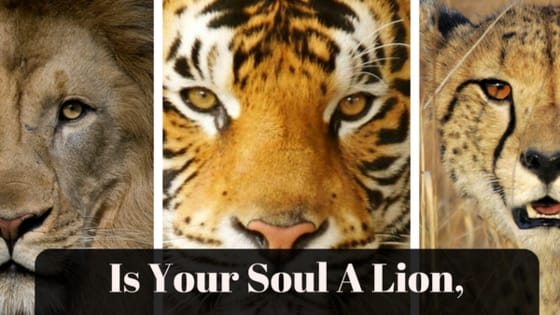 Which jungle cat are you spiritually entwined with?