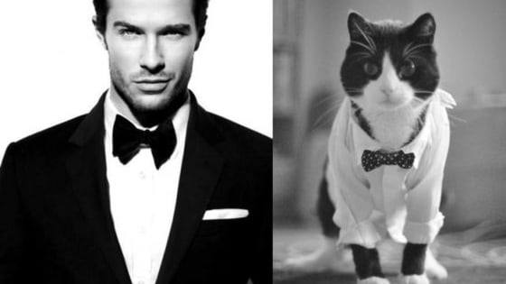 Two of the internet's favorite things - sexy male models and adorable cats.  Featuring pictures of male models - taken in various attractive poses - and their feline doppelgangers, this list will make you realize just how much good-looking men and furry kittens have in common.