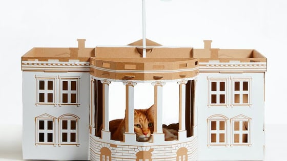 Or a Cat White House! Or a Cat Pyramid!