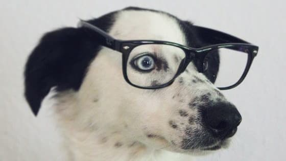 Ever wondered how smart your dog is? This quiz will help you find out.