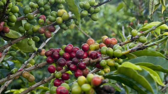 The perfect cup of coffee can be hard to find. From the type of roast to the producing country, there's much to consider. Fortunately, The World Atlas of Coffee (2nd Ed.) by James Hoffmann is here to fill you in on all things coffee related. Take the quiz to find out which coffee-growing country has your perfect beans.