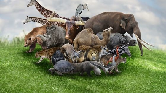All you have to do is to complete the film's title with the correct animal that's missing in it