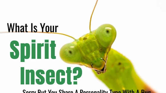 Insects enjoy the world in a whole different way than we do. While we pay little attention, the insects on Earth live a life more closely intertwined with the grass, dirt, air, and plants. Take this quiz and determine which insect is just like you.