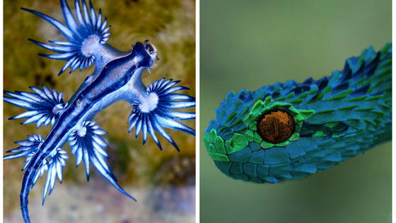 Some are gorgeous, some are gross, but all of these animals are crazy to look at!