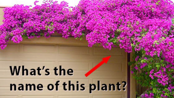 Test your knowledge with this awesome plant quiz!:)