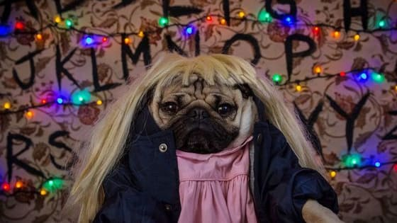 Your favorite Netflix show plus an adorable Pug? You LITERALLY can't lose!