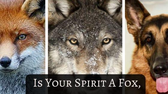 Qual é o teu espírito animal?