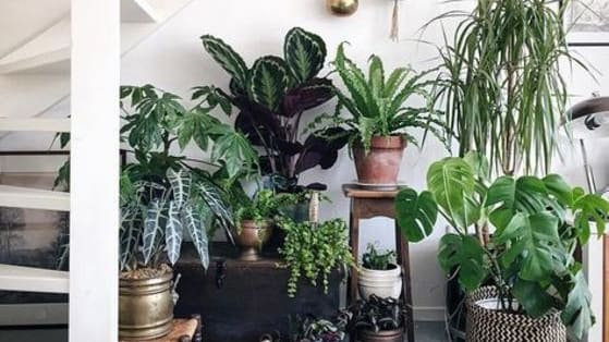Winter can be a downer but a great way to elevate your mood is by incorporating the outdoors in your home! Plants not only make winter tolerable but they are fantastic for de-stressing and purifying air.