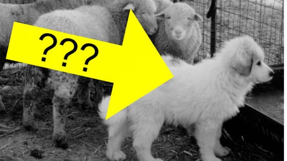 You won't BELIEVE what some of your favorite pups were originally bred for. Get ready for the cutest matching game ever!