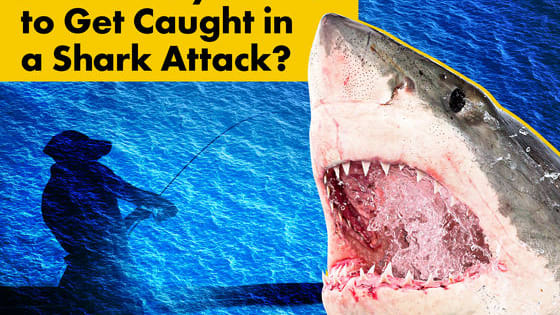 """A shark's world is mysterious, even to George Burgess, Curator of the International Shark Attack File. """"When we enter the sea, it is a wilderness experience,"""" he says. """"We are eco-tourists, we are visitors to a wild world, and that wild world doesn't guarantee one hundred percent safety."""" Using data from the Shark Attack File, how likely are you to die in a shark attack?"""