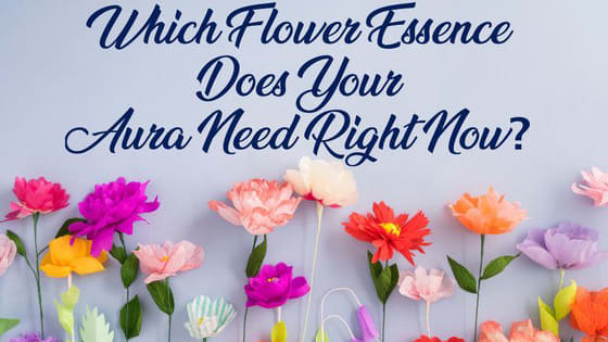 Find out which flower essence will boost your aura into over drive.