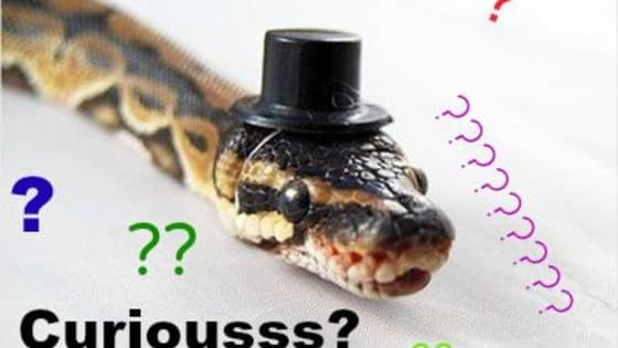 BONUS find out your role in the great snake war!