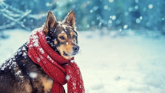 It's going to be a long winter, so protect your animals properly.