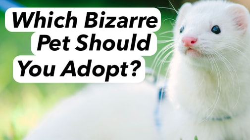 There are some weird looking animals out there! Which bizarre pet should you adopt??