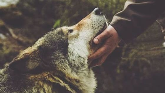 What is your spirit animal? Find out...