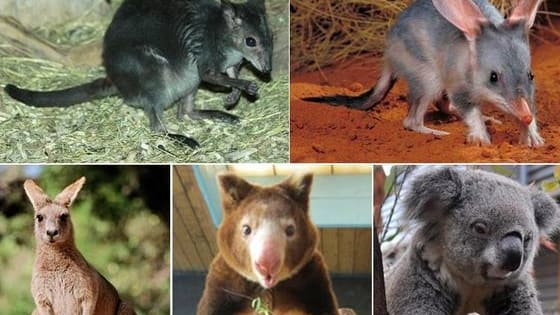 Take a walk on the wild side and discover your marsupial spirit animal!