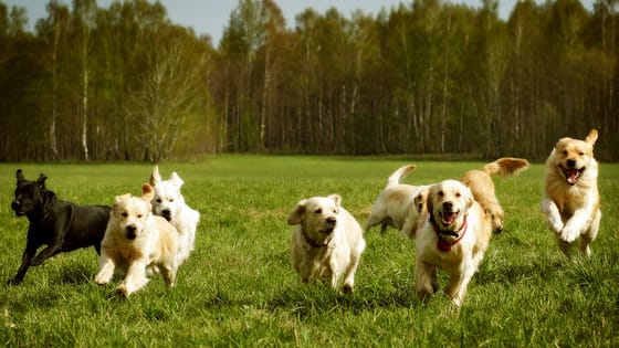 Man's best friend comes in many shapes and sizes and plenty of different personality traits. Find out which breed you are with our quiz.