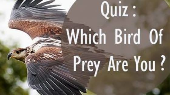 Known for their speed, strength and smarts, birds of prey have a a pretty cool reputation in the animal kingdom. Find out which bird of prey you are!