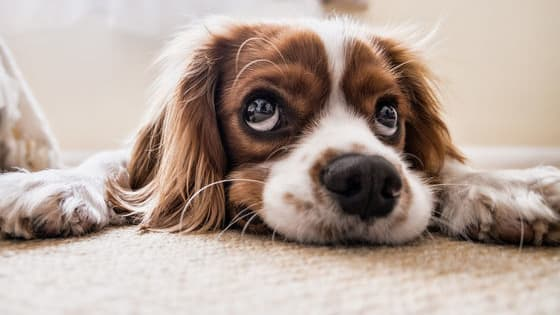 Do you think you know everything about your four legged family member? Check out these amazing true facts about dogs.
