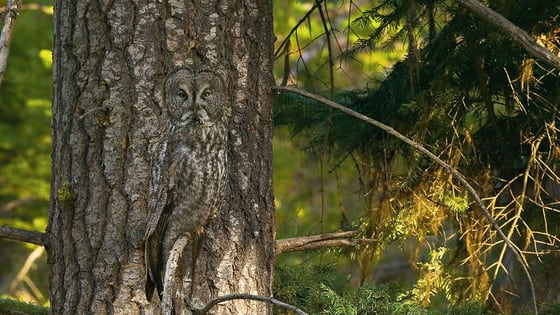 Check out these animal camouflage photos by photographer Art Wolfe. How quick can you spot these hidden animals? It is harder than you think. Have Fun!!!