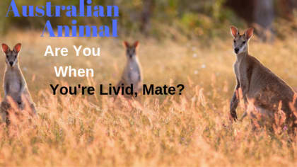We can all have a temper from time to time. When you do, you are just like a certain animal from the Australian outback. Take this quiz and we'll determine which one.