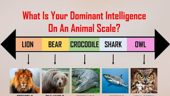 Find out now if you think more like a lion or a Shark!