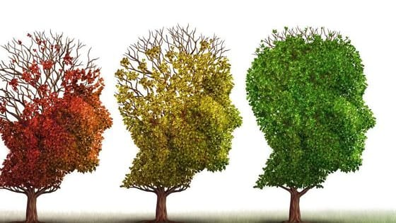 According to new research, your brain ages at a different rate than the rest of your body. So how quickly is your brain aging? Take this quiz - based on the research of neurologist, Dr. Vincent Fortanasce - to find out!