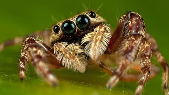 With about 40,000 types in the world, spiders are living on every continent except Antarctica. And they're evolving. Fossils have been found dating back 318 million years. What type of spider is calling to you?