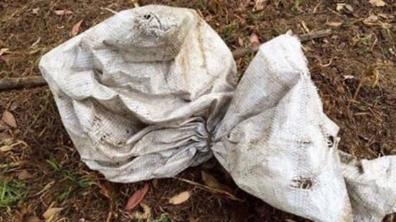 Juliana Turner happened upon the sack, sitting abandoned in a field and knew just what to do!
