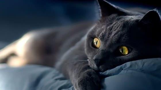 На кого вы похожи в постели — на нежного котёнка, игривую мартышку или властного тигра? А может быть, вы восхищаете своего партнёра змеиной пластикой? Узнайте больше о своём сексуальном поведении, пройдя тест от Лайфа.
