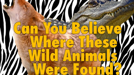 See if you can pick out the unlikely locations these beasties were found in!