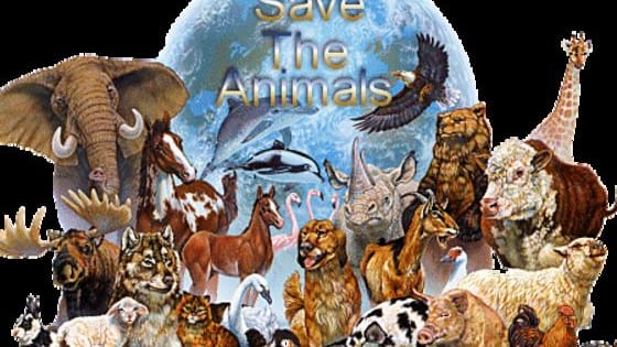 Try to pick out the animal from a selection of other animals and see how much of an animal genius you really are.