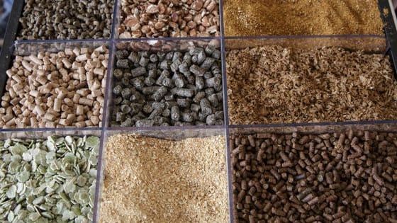 Can you name these feed ingredients?