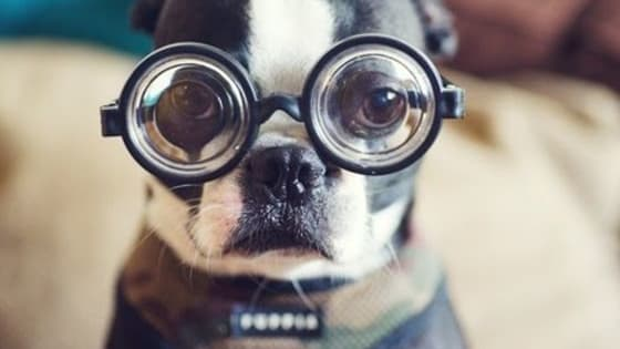 So you think you know dogs? We will let this quiz be the judge.  Visit http://lmfaoanimals.com for more animal quizzes.