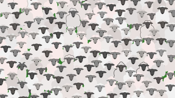 There is a goat hiding in this flock of sheep. How fast can you find it? Have Fun!!!