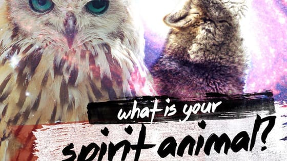 We all have a special connection to a certain animal.Take this quiz to find out which one!:)