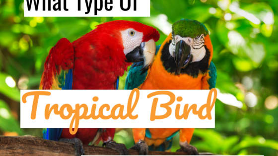 Somewhere out there a tropical bird shares many characteristics with you. A spirit bird with whom you are forever bonded. Which species of bird it is says a lot about your personality.  Take this quiz to determine which tropical bird you are most like and what that says about your personality.