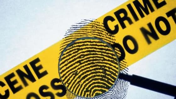 Find out if you have what it takes to solve the crime!
