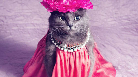 She's taking over the fashion world, one paw at a time!