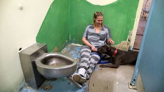 The Maricopa County Sheriff's Office Animal Safety Unit, or MASH for short, has been rescuing abused animals since 2000, but now it's also serving as a place of healing for inmates from local prisons who come to help the animals. Find out more here!