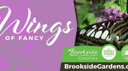 Which butterfly are you most like? Take this personality quiz to find your Wings of Fancy Butterfly Buddy.