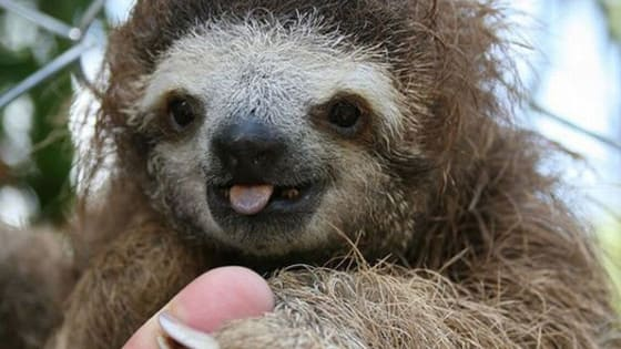 A series of questions will be asked and at the end, you will see your result of your kind of Sloth.