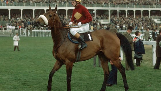 Can you name these Grand National winners?