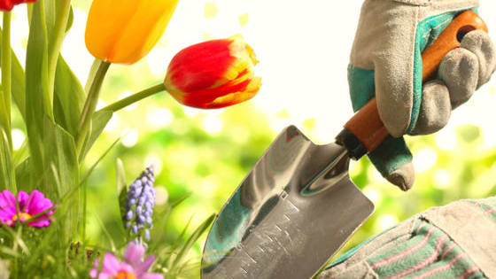 Do you have the green thumb of God or is your lawn more weedy than wonderful?