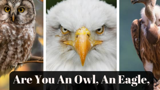 The ultimate bird-sonality quiz!