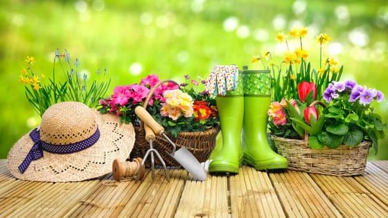 Plant all essentials