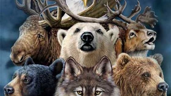 Are you a lion? An eagle? A wolf? Find out your true spirit animal by taking this quiz!