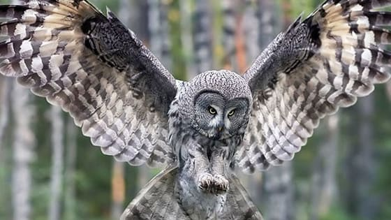 Take this quiz to find out what kind of owl you are! Let me know in the comments if you like your results!